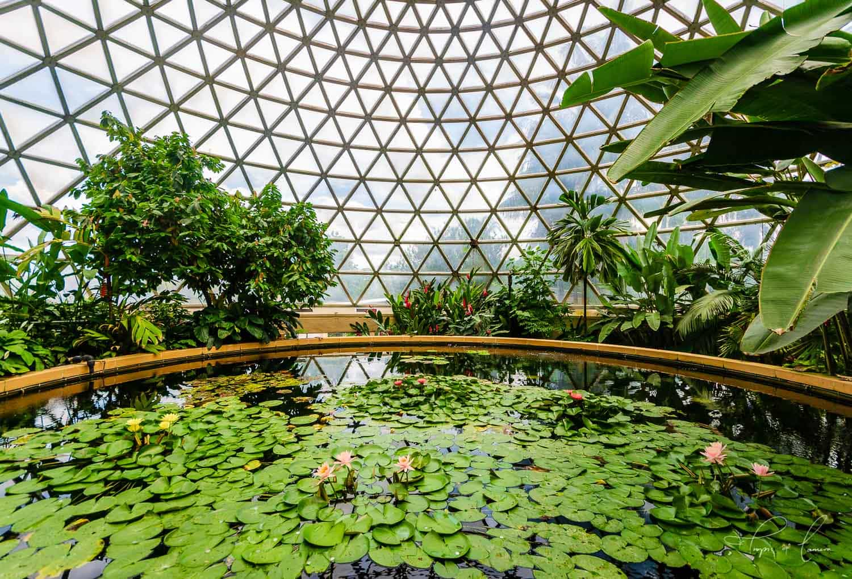 Brisbane Botanic Gardens great dome