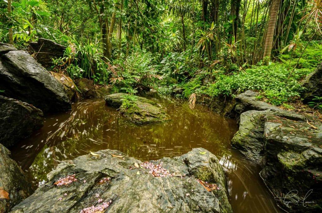 Water form at Brisbane Botanic Gardens