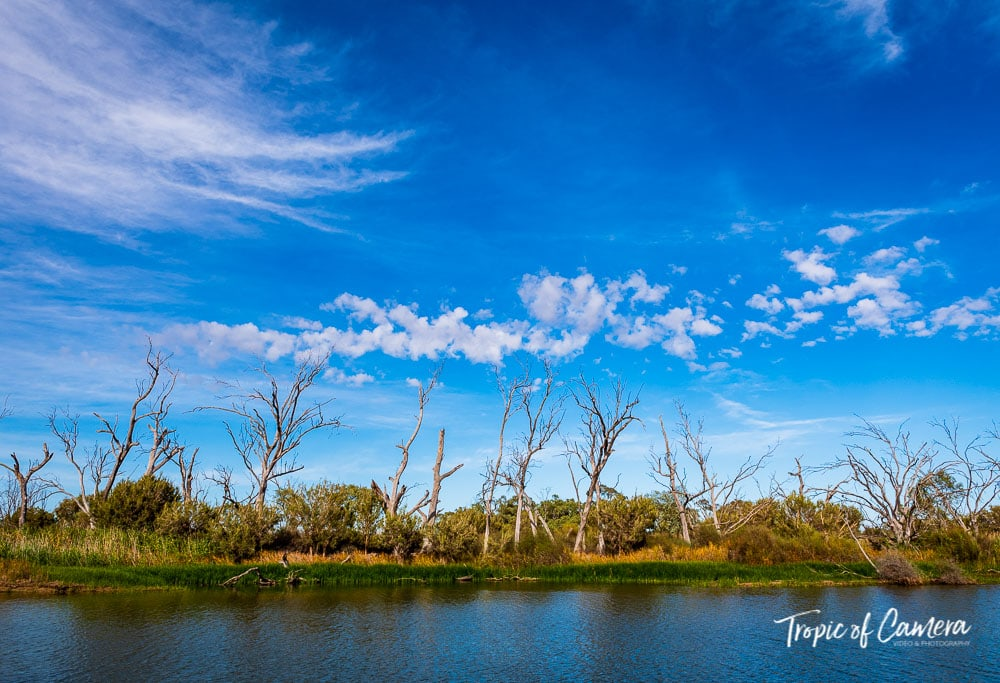 Gum trees along the Wimmera River