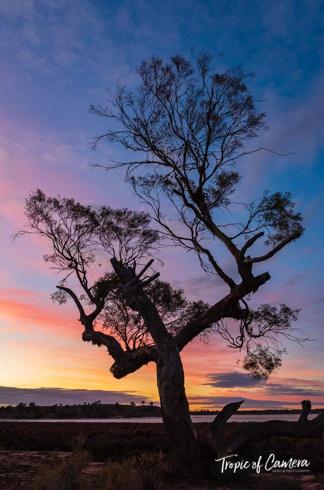 Silhouette of a gum tree at sunset at Murray Sunset National Park