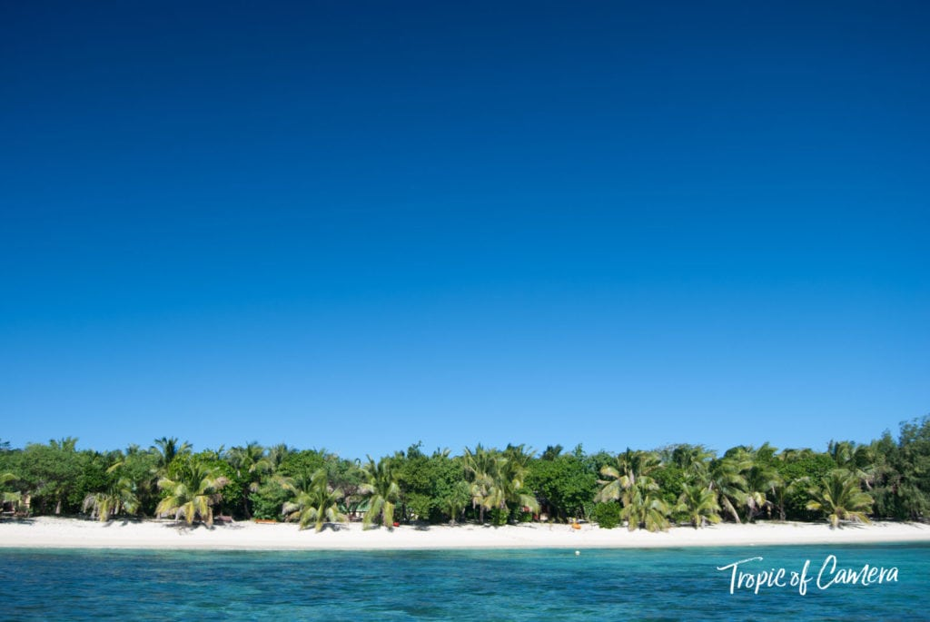 Row of palm trees on a sandy beach in Fiji
