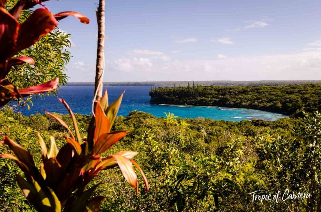 Scenic view of the jungle and water in New Caledonia