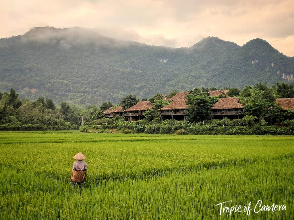 A farmer stands in a rice field at Mai Chau.