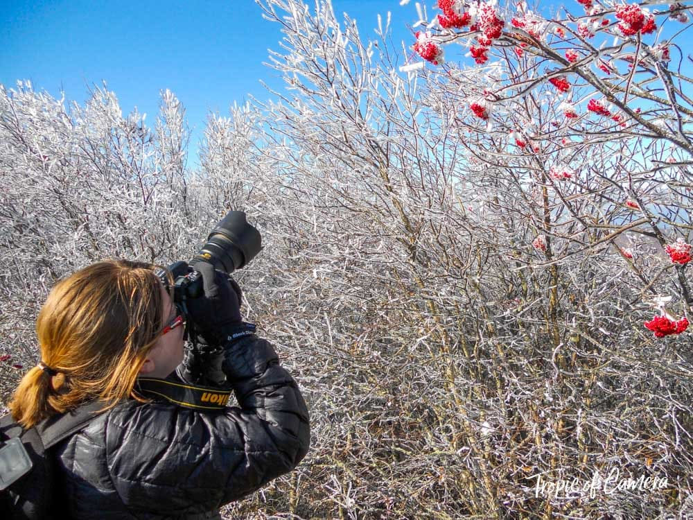 Woman photographing trees covered in ice on the Blue Ridge Parkway