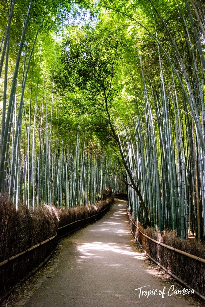 Bamboo forest in Arashiyama, Japan