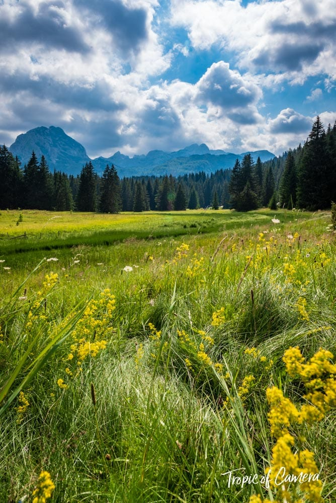 Field of flowers in Durmitor National Park, Montenegro