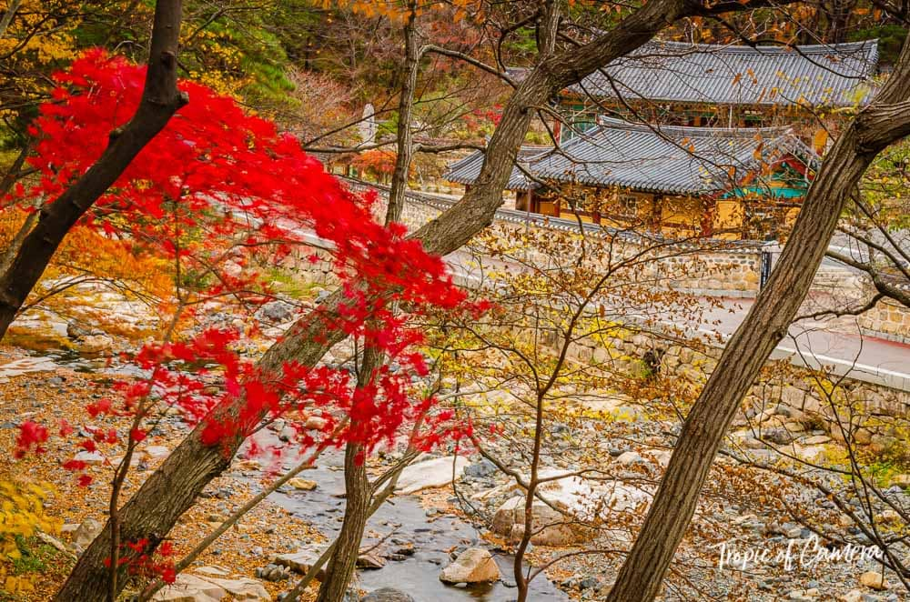 Autumn leaves at Tongdosa Temple, South Korea