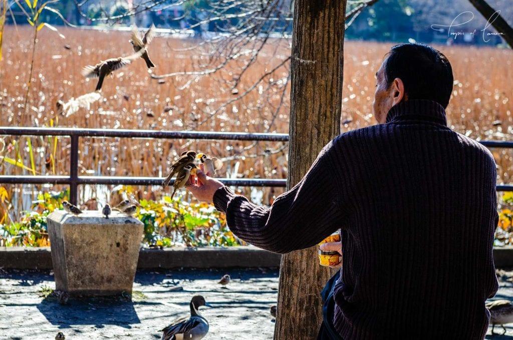 Feeding birds at Ueno Park, Tokyo, Japan